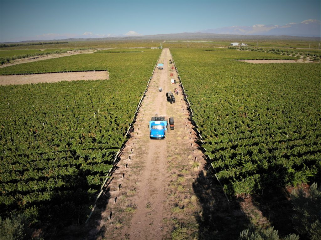 The estate of Vignes des Andes