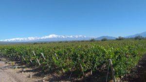 Domaine de Vignes des Andes